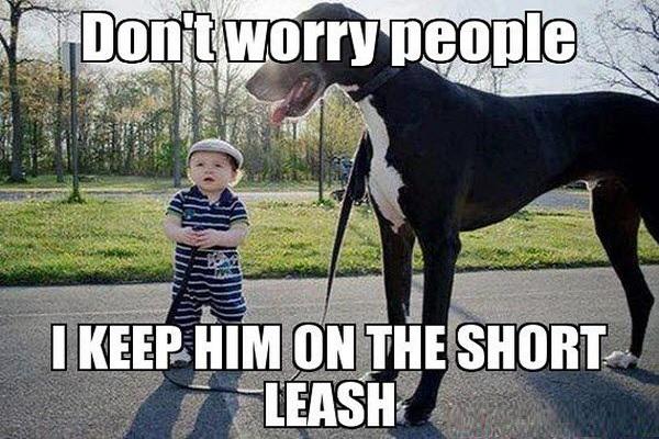 Week 30: Short Leash